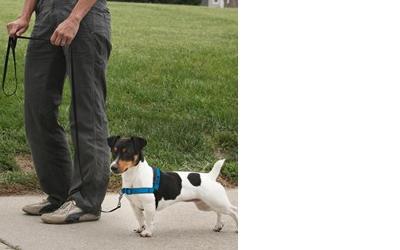 Für Hunde mit einem Brustumfang von 38cm - 91cm geeignet