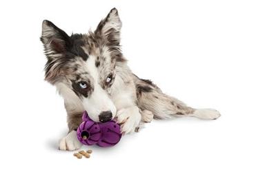 Perfektes Beschäftigungsspielzeug für kleine und mittelgroße Hunde
