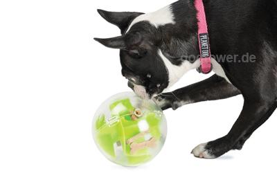Ideales Hundespielzeug für kleine Hunde