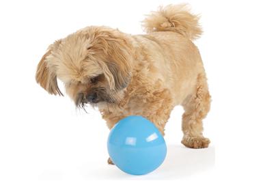 Planet Dog Spielzeug zum Befüllen