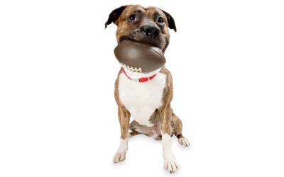 Ausgefallenes Wurfspielzeug für mittelgroße und große Hunde