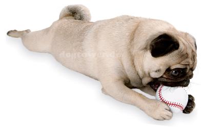 Baseball Spielen für Hunde