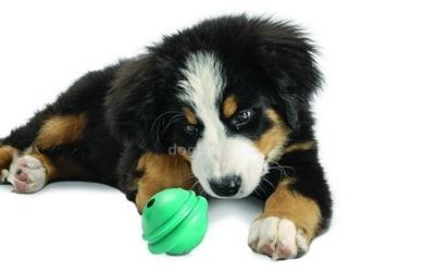 Hundespielzeug Ringo