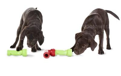 Premier Spielzeug für Hunde