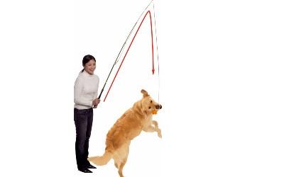 Reizangel Dog Dangler