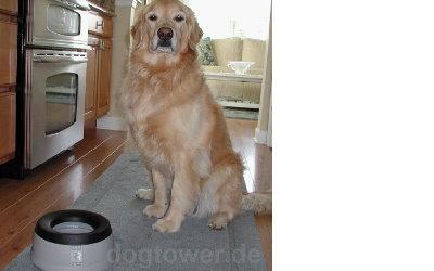 Hundenapf auch für große Hunde nutzbar