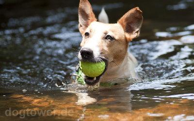 Rogz Asteroidz Hundebälle