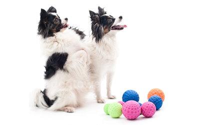 Rogz Asteroidz Hundebälle auch für kleine Hunde