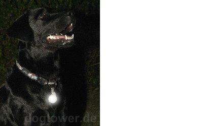 Rogz Blinklicht Roglite (glow)