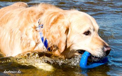 Tolles Wasserspielzeug für kleine und große Hunde