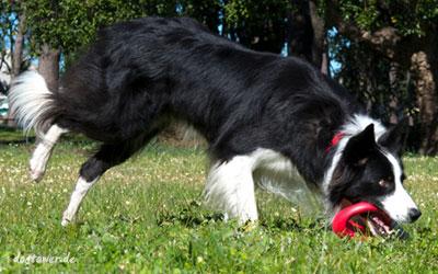 Durch Beschwerung im Boden fliegt das Spielzeug sehr gut