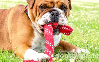Extra stabil - auch für starke Hunde geeignet