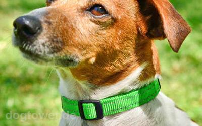 ROGZ Hundehalsband neongrün in der Praxis