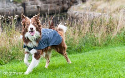 Ideal auch für den Hundesport einsetzbar