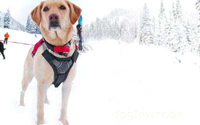 Extra breite Auflagefläche für Tagestouren oder empfindliche Hunde