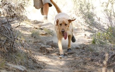 Grip Trex Hundeschuhe im Einsatz