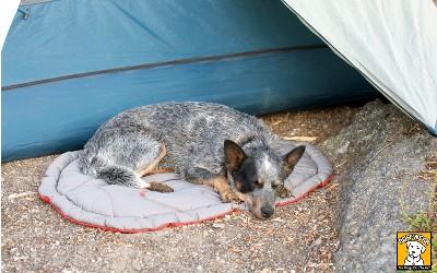 Hundebett Highlands, grau