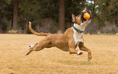 Hundespielzeug Huckama
