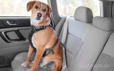 Gurten Sie Ihren Hund sicher im Auto an
