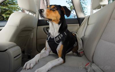 Trotz Sicherung ausreichend Bewegungsspielraum für Ihren Hund