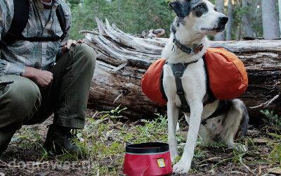 Ruffwear Hundehalsband Top Rope in graphit grau