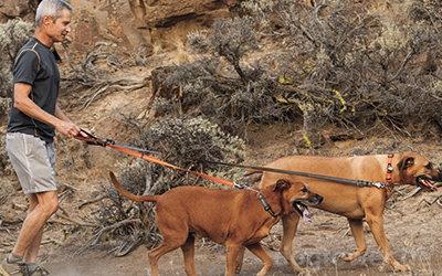 Ruffwear Leine für kleine UND große Hunde einsetzbar