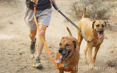 Hundeleine mit geringem Eigengewicht
