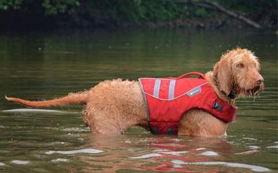 Hundeschwimmweste K9 Float Coat, rot