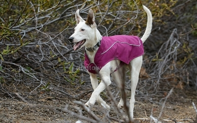 Ruffwear K9-Overcoat Utility Jacket, Lakespur Purple