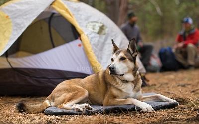 Ideale Liegefläche für kleine und mittelgroße Hunde