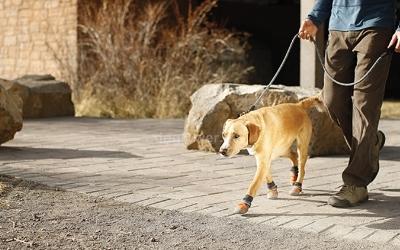 Hundeschuhe Summit Trex