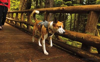 Hundegeschirr im Einsatz