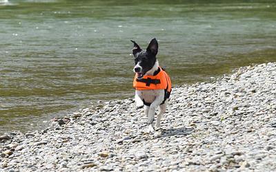 Schwimmweste für mehr Sicherheit für kleine und große Hunde