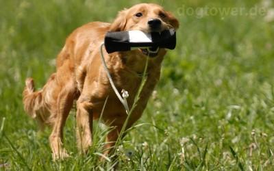 Nylondummy für Hunde