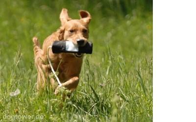 Befüllbarer Hundedummy