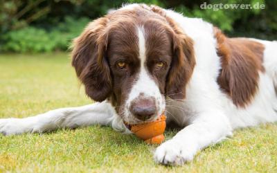 Robustes, zahnreinigendes Hundespielzeug