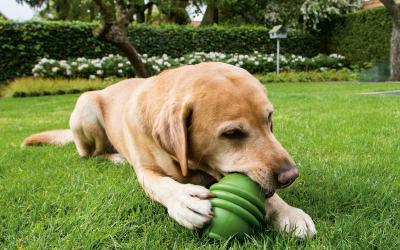 Ein tolle befüllbares Hundespielzeug aus Naturkautschuk