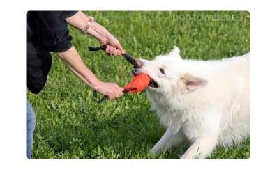 Hundemappe, Team Canin
