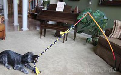 Nutzbar für eine Vielzahl von Hunderassen
