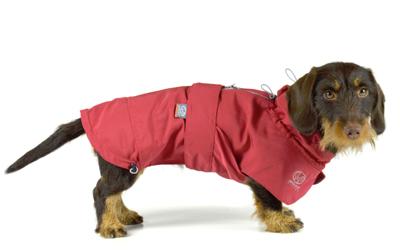 Toller Regenschutz auch für kurzbeinige Hunde