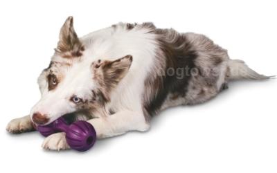 Vollgummi Hundespielzeug, zum Apportieren und Kauen