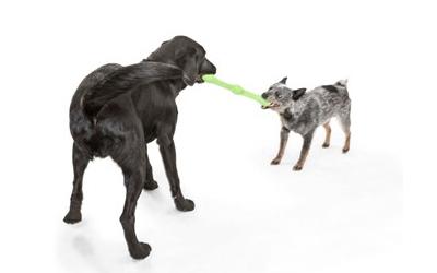 Ein ideales Hundespielzeug zum Werfen und Apportieren
