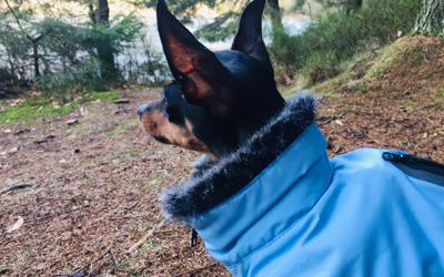 Wolters Parka Hundemantel, riverside blue