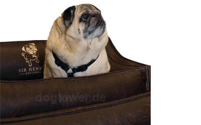 Ideales Hundebett für kleine und mittelgroße Hunde