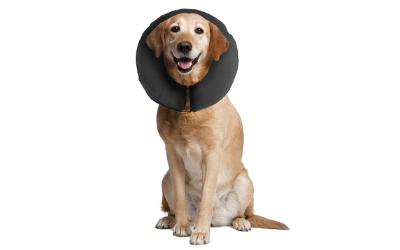 Für Langhaar- und Kurzhaarhunde