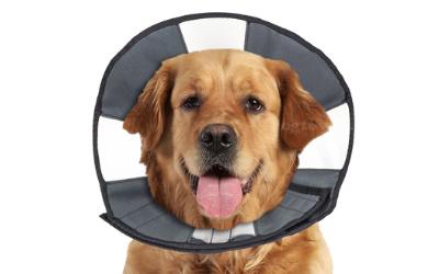 Halskrause auch für große und bullige Hunde nutzbar