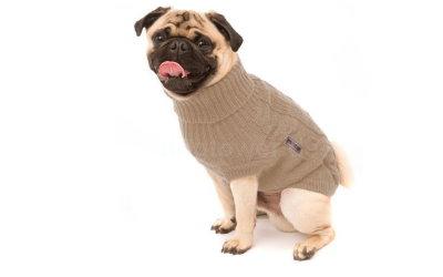 Hundepullover auch für bullige Hunderassen