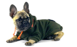 Bull-Dogs Cotton Hoodie, green/orange