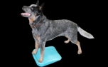 FitPAWS® Paw Pods 4-Pack