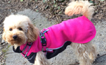 JumppaPomppa Pink Hundepullover, rosa